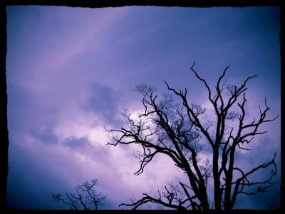 Dead-Tree-Alternate-Take