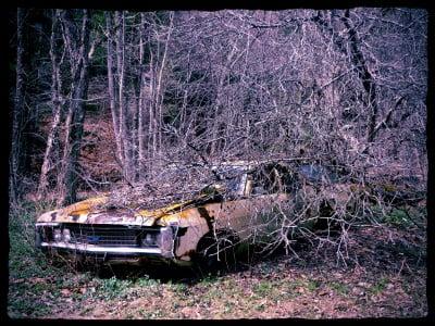 Tree-Hits-Car