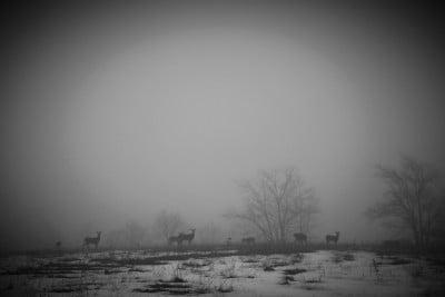deer-on-the-horizon