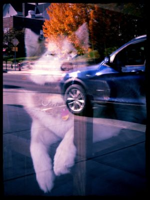 dog-in-a-barbershop-window