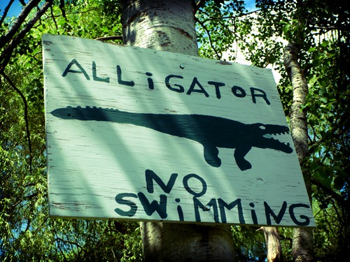 Alligator -- No Swimming